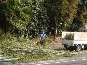 竹林の伐採・処分