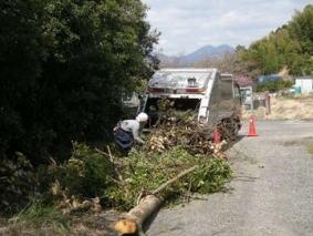 樹木の処分